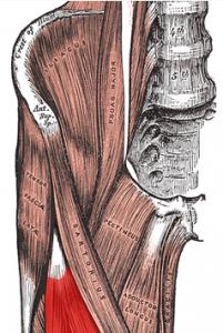hip flexor pain all through workout