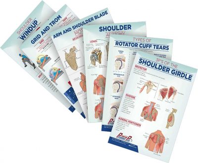 Chiropractic Posters Shoulder
