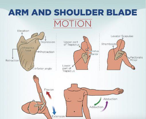 Shoulder Complex Movements poster