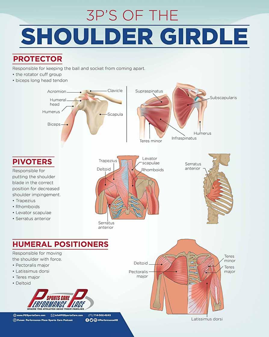 Shoulder Anatomy Poster