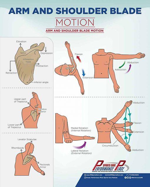 Shoulder Movement Poster