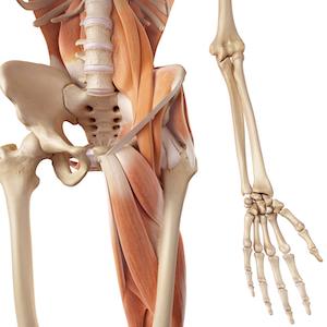 Hip Flexor Tendonitis